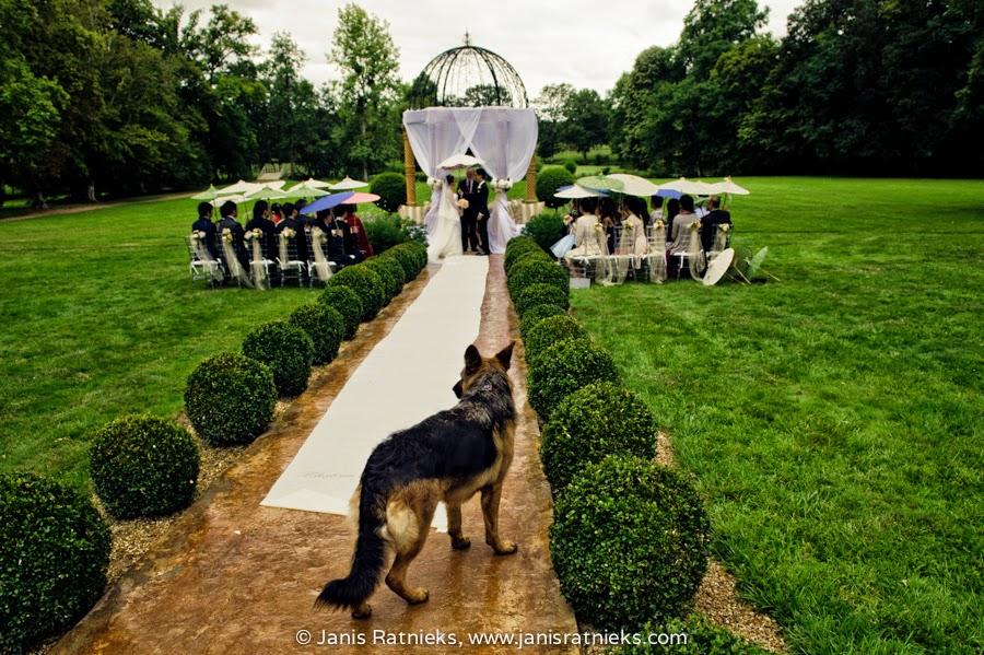 outdoor wedding ceremony dog