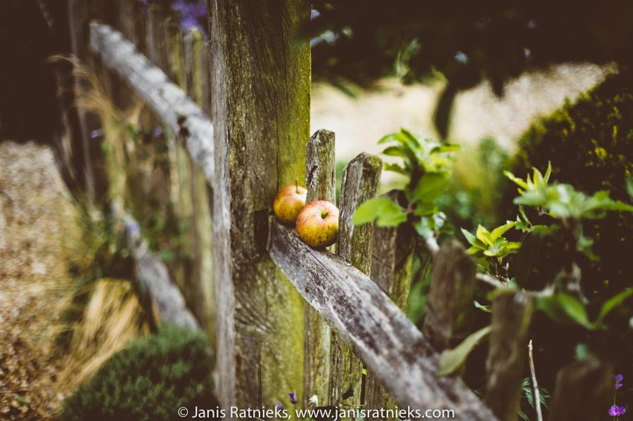 apple garden wedding