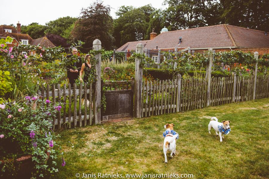 dogs wedding UK