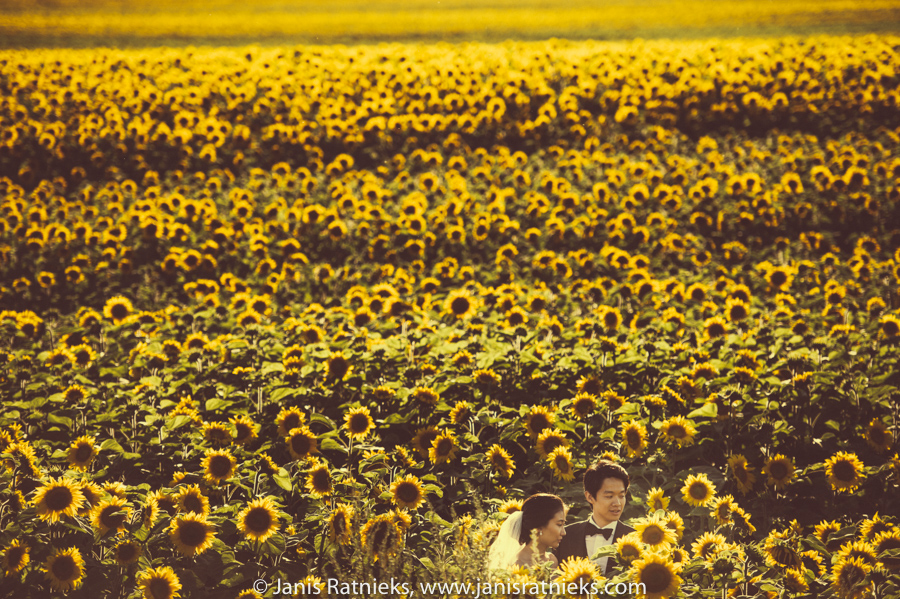 Sunflower field France